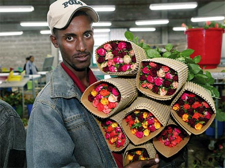 Ethiopian Roses